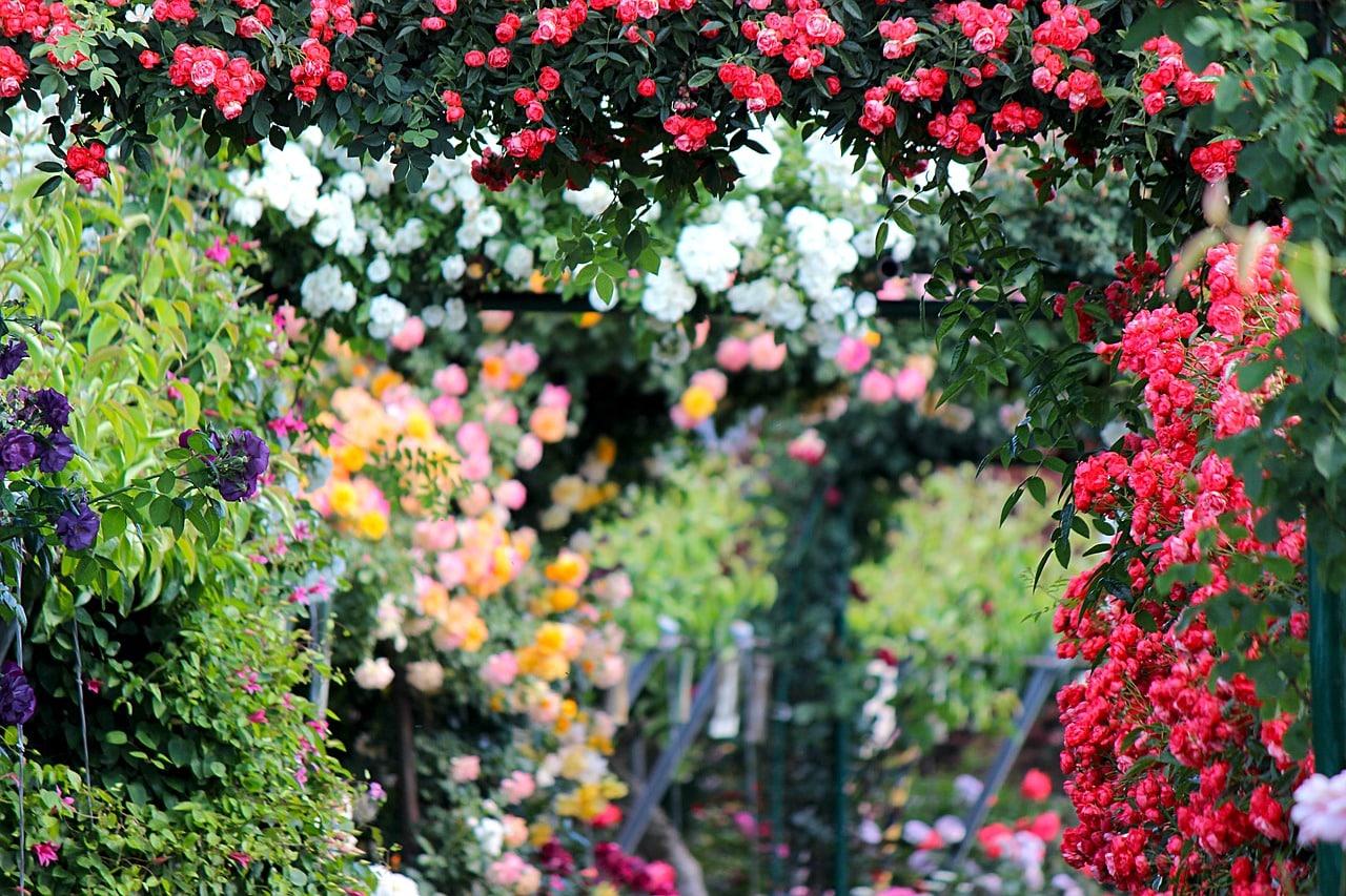 Więcej cienia w Twoim ogrodzie