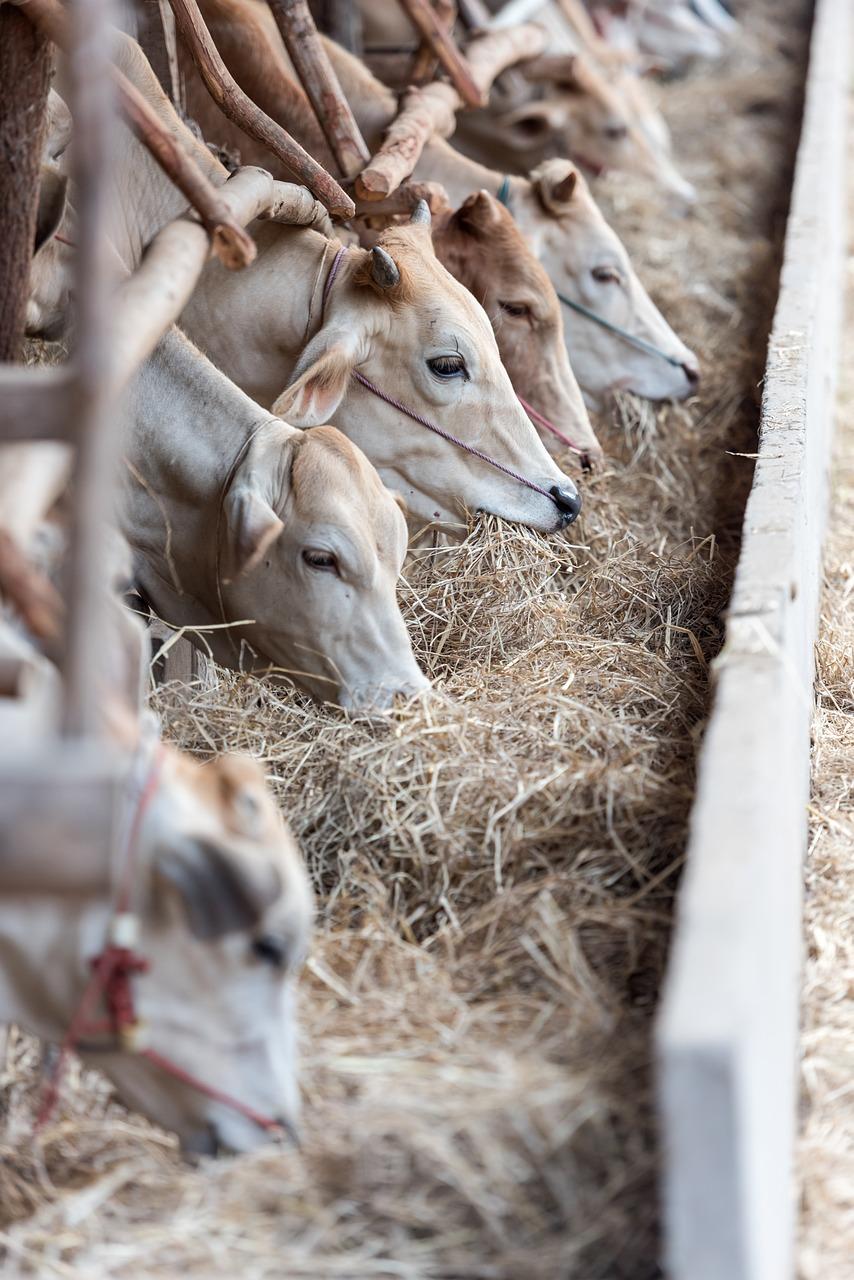 Hale rolnicze: praktyczne rozwiązanie